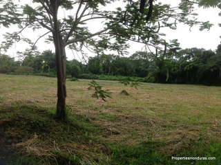 Mango Tree community lots
