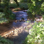 stream along the property