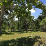 True direct Beachfront Property El Porvenir Honduras
